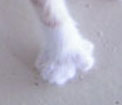 What's furry & Has 14 toes?