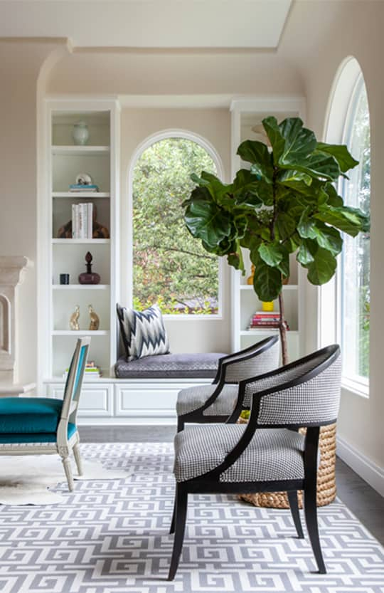 Fiddle Leaf Tree Trend Watch
