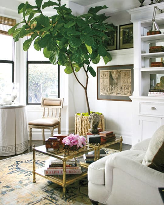 Trend Fiddle Leaf Tree