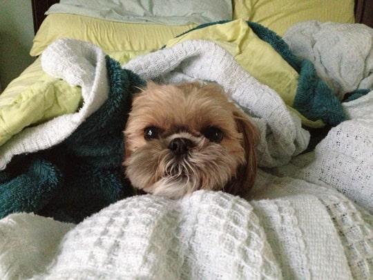 bentley resting